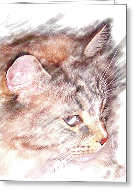 Greeting Card featuring the photograph Mouser by Barbara MacPhail