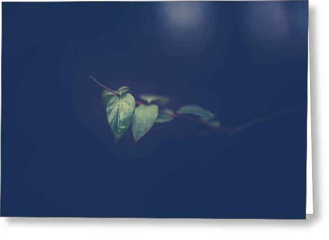 Greeting Card featuring the photograph Moving In The Shadows by Shane Holsclaw