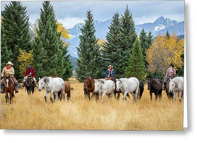 Moving The Herd Greeting Card by Jack Bell