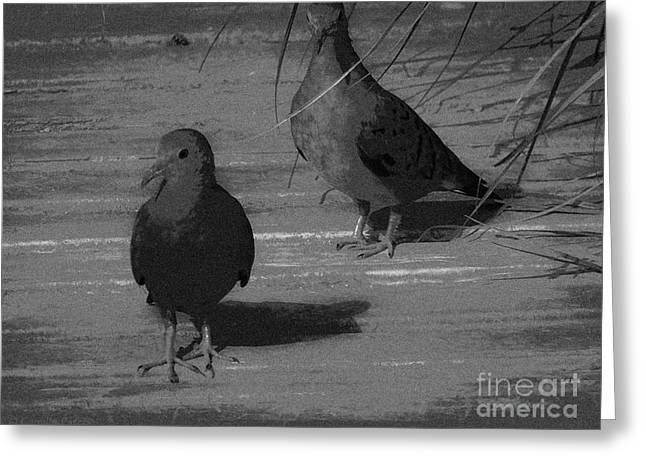 Mr And Mrs Dove Greeting Card