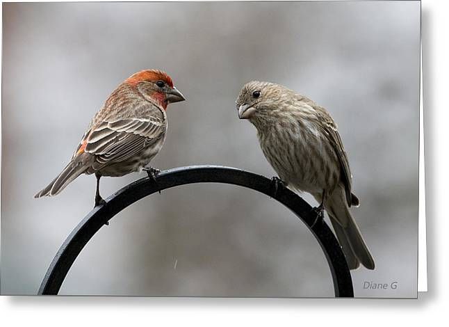 Mr. And Mrs. House Finch Greeting Card