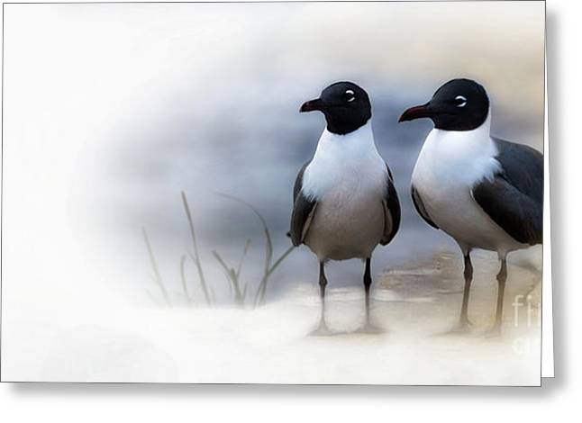 Mr And Mrs Laughing Gull Greeting Card