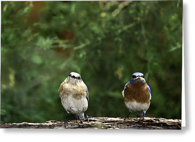 Bird Photographs Greeting Cards - Mr and Mrs Greeting Card by Rob Travis