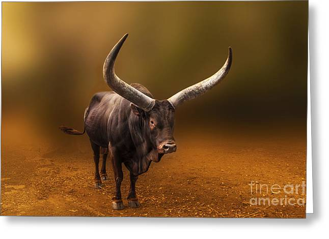 Mr. Bull From Africa Greeting Card