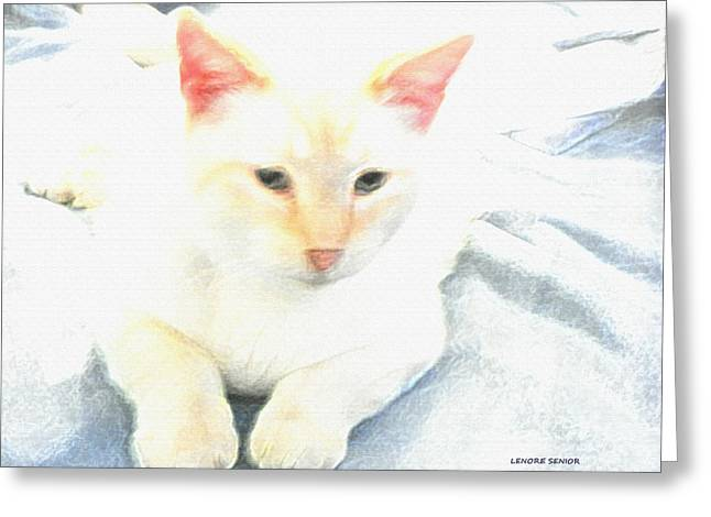 Mr. Cat Greeting Card