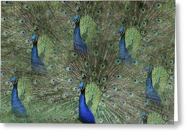 Mr Peacock Greeting Card