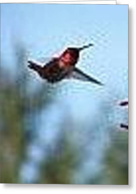 Mr Red Breast Hummer Greeting Card by Laurie Kidd