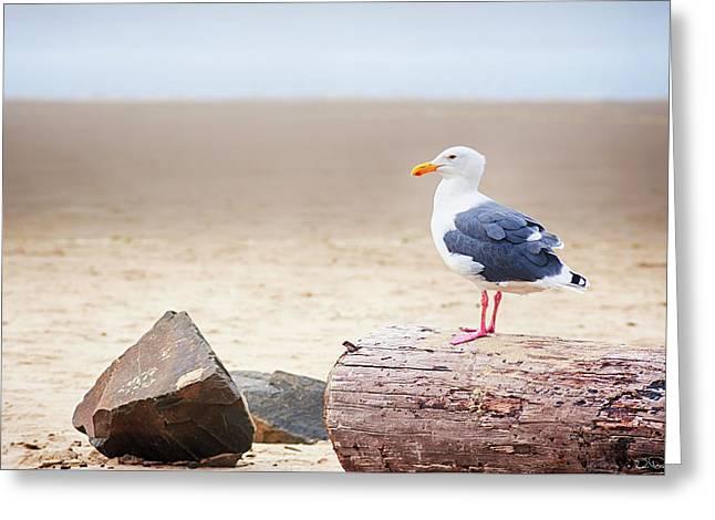 Mr. Seagull Greeting Card