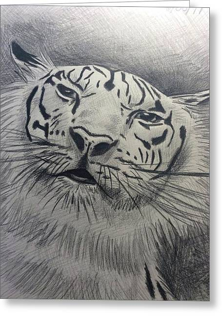 Mr Tiger Greeting Card by John DiMare
