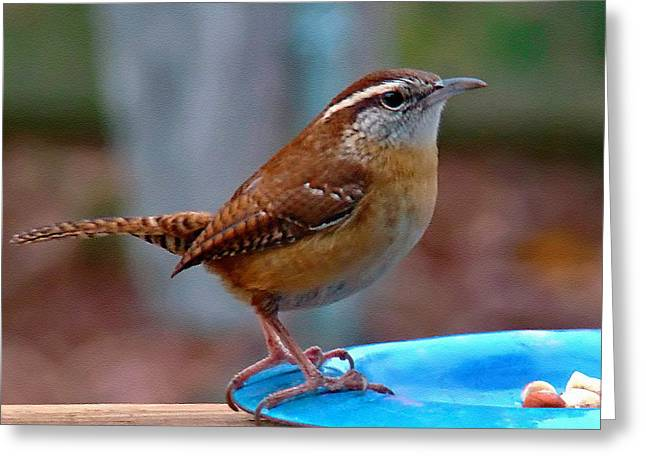 Mr Wren Greeting Card by Sue Melvin