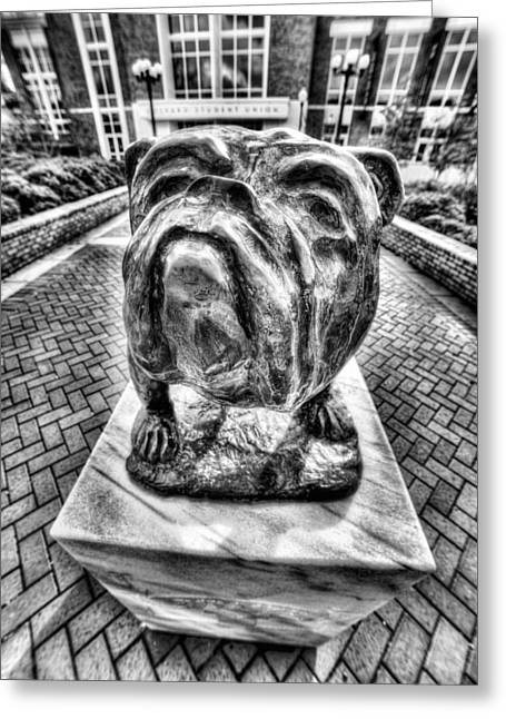 Msu Bulldog Black And White Greeting Card by JC Findley