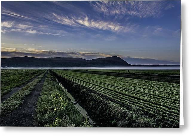 Dawn And Fog Over The Farmland Greeting Card
