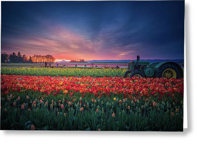 Mt. Hood And Tulip Field At Dawn Greeting Card