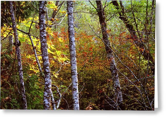 Mt Pyrography Greeting Cards - MT Ranier Fall Colors Greeting Card by Bob Groshart