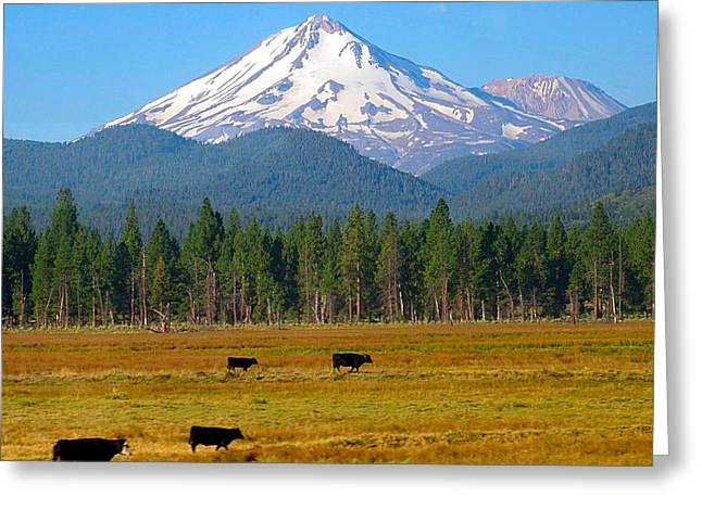 Mt. Shasta Morning Greeting Card by Betty Buller Whitehead