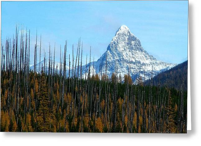 Mt St Nicolas After The Fire Greeting Card