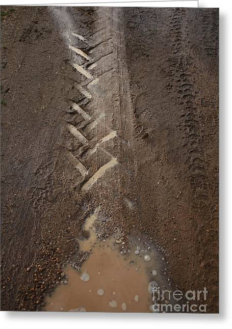 Greeting Card featuring the photograph Mud Escape by Stephen Mitchell