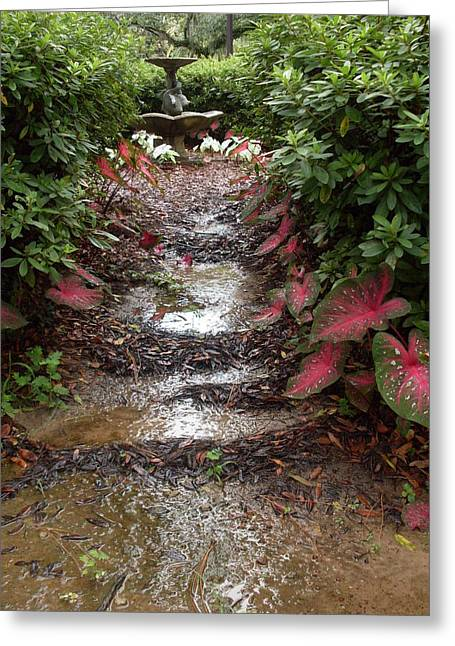Muddy Fountain Path Greeting Card by Warren Thompson