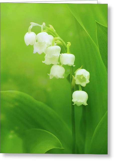 Muguet Melody Greeting Card