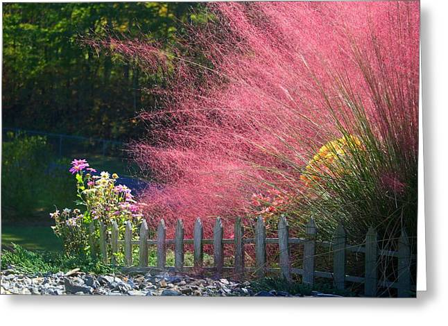 Greeting Card featuring the photograph Muhly Grass by Kathryn Meyer