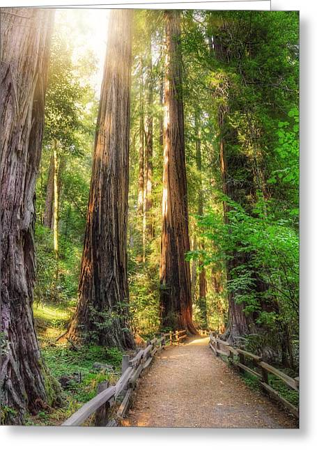 Muir Woods Forest Path And Redwood Trees Greeting Card by Jennifer Rondinelli Reilly - Fine Art Photography