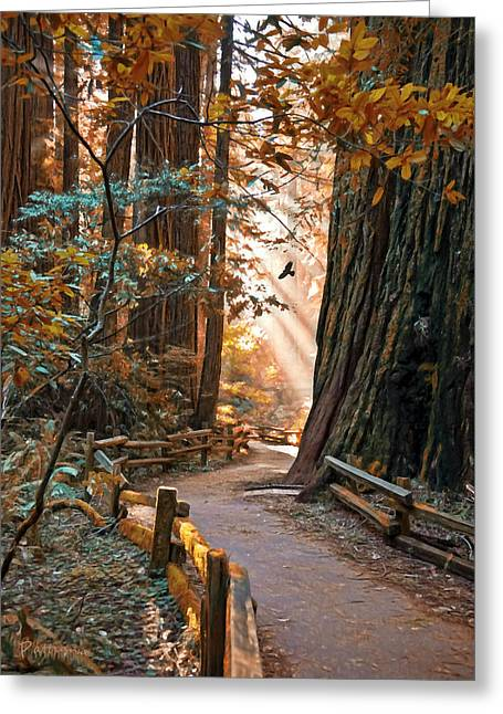 Streaming Light Greeting Cards - Muir Woods In Fall Greeting Card by Patricia Stalter