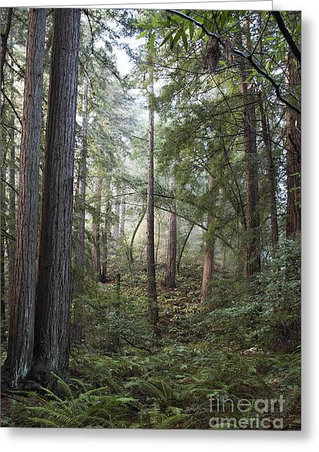 Greeting Card featuring the photograph Muir Woods Tranquility by Sandra Bronstein