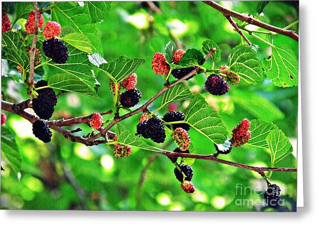 Mulberry Summer Greeting Card by Sarah Loft