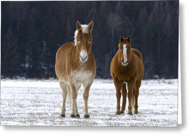 Mule And Quarterhorse Greeting Card by Jean-Louis Klein & Marie-Luce Hubert