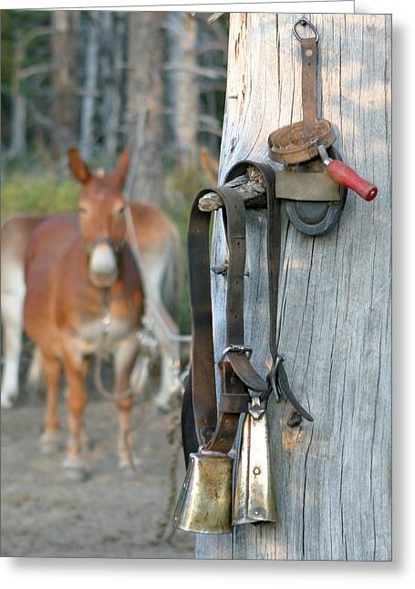 Mule Bells Greeting Card
