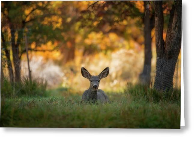 Mule Deer In Apple Orchard Greeting Card