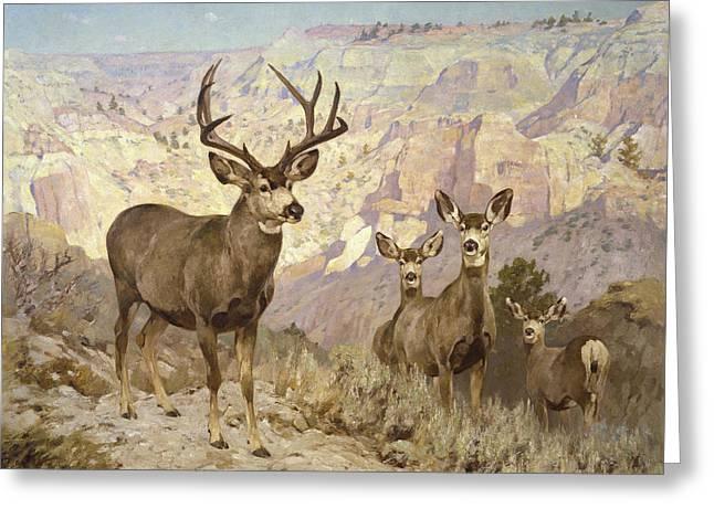 Mule Deer In The Badlands, Dawson County, Montana Greeting Card