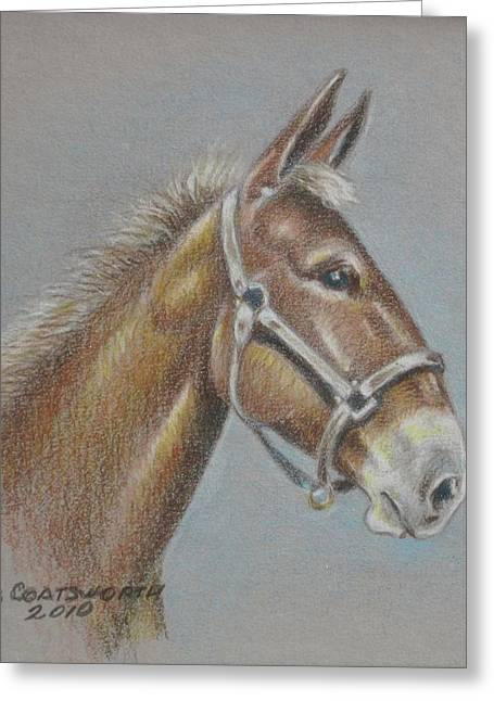 Mule Head Greeting Card by Dorothy Coatsworth