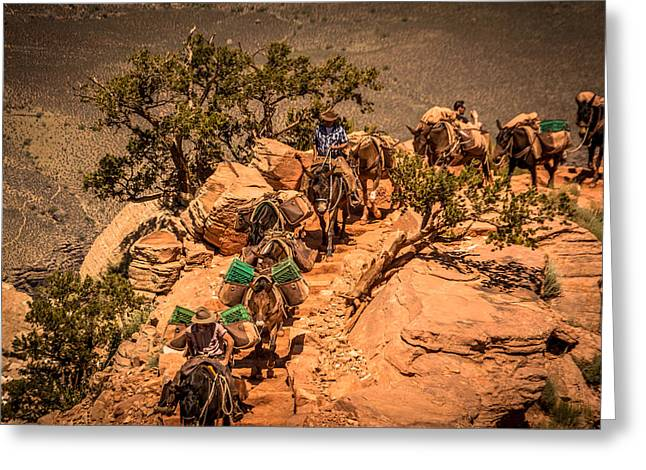 Greeting Card featuring the photograph Mule Train In Grand Canyon by Claudia Abbott