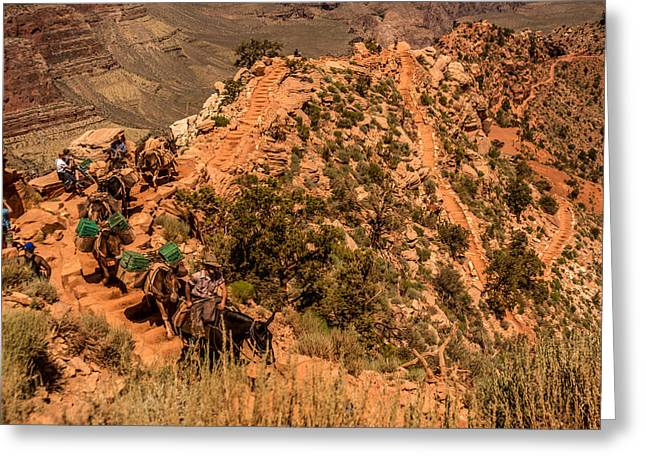 Greeting Card featuring the photograph Mule Train South Kaibab Trail by Claudia Abbott