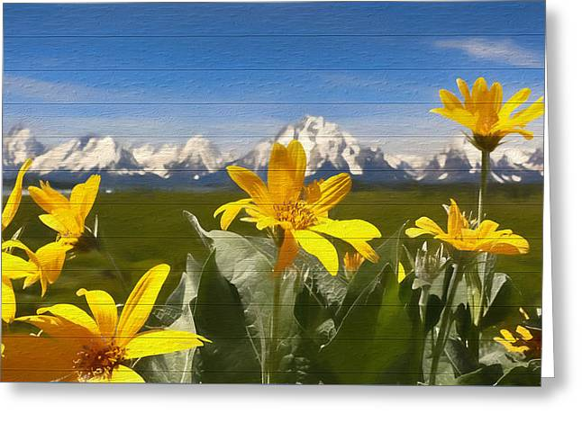 Mules Ear Flowers And Grand Tetons Greeting Card