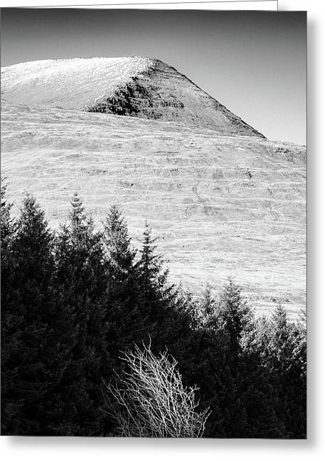 Mull Trees And Peak Greeting Card by Dave Bowman