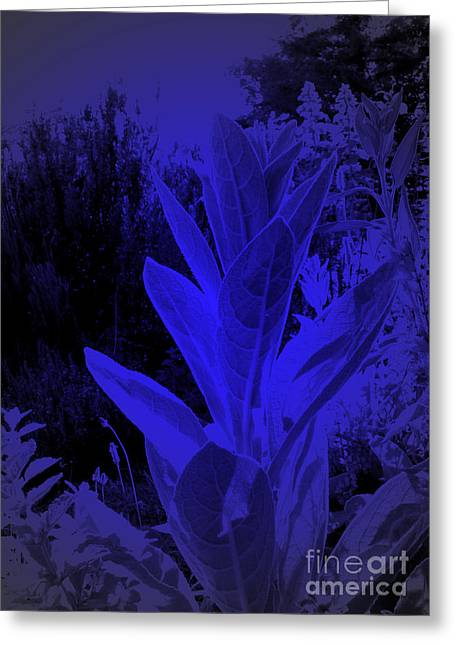 Mullein In The Moonlight Greeting Card by JoAnn SkyWatcher