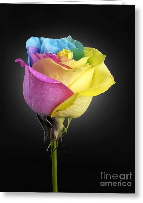Rainbow Rose 1 Greeting Card by Tony Cordoza