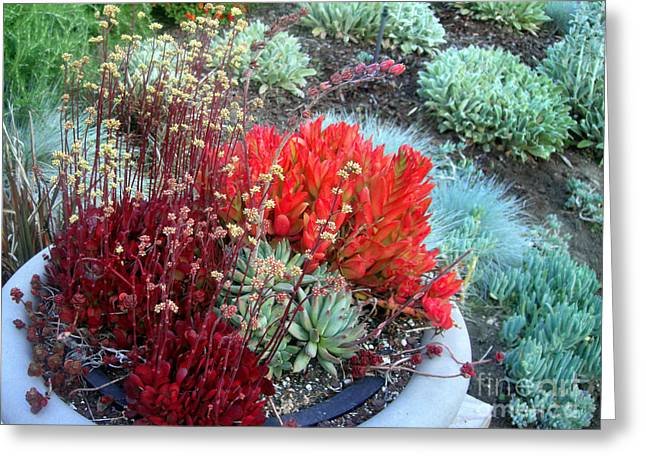 Multi Color Succulents And Other Plants Greeting Card