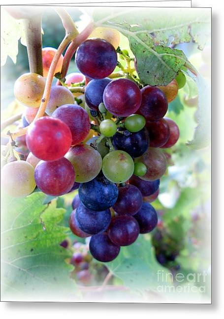 Multicolor Grapes Greeting Card by Carol Sweetwood