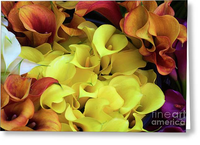 Multicolored Calla Lillies Greeting Card