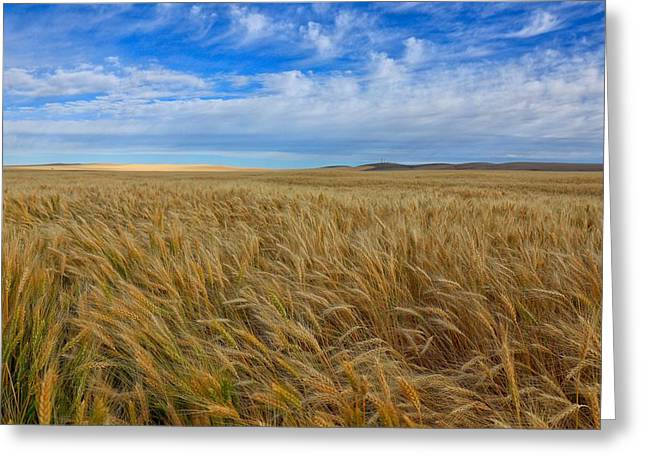 Horse heaven hills greeting cards page 2 of 3 fine art america multicolored wheat greeting card m4hsunfo