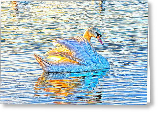 Multicolour Swan Greeting Card
