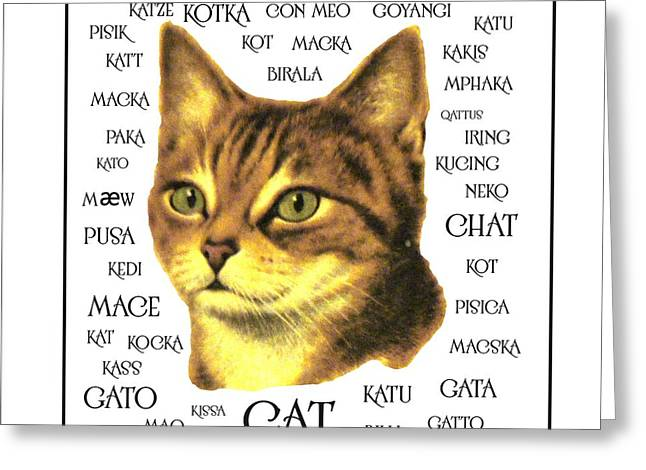 Multilingual Cat Greeting Card by Priscilla Wolfe
