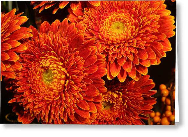 Mums In Flames Greeting Card by Rosita Larsson
