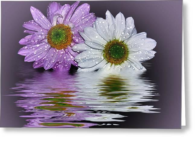 Mums Reflecting In Lilac By Kaye Menner Greeting Card by Kaye Menner