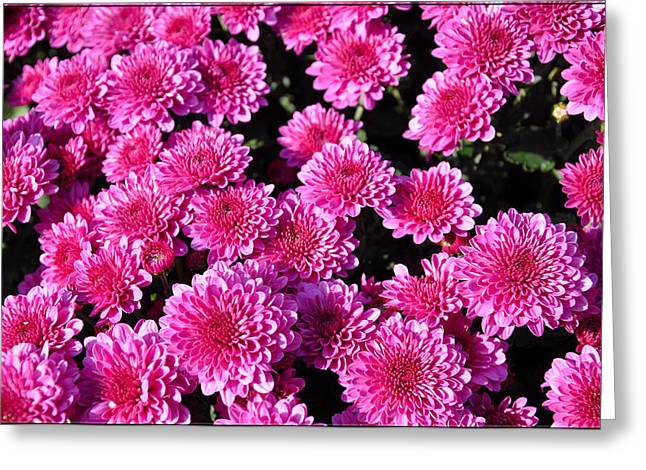 Mums The Word Greeting Card by Brittany H