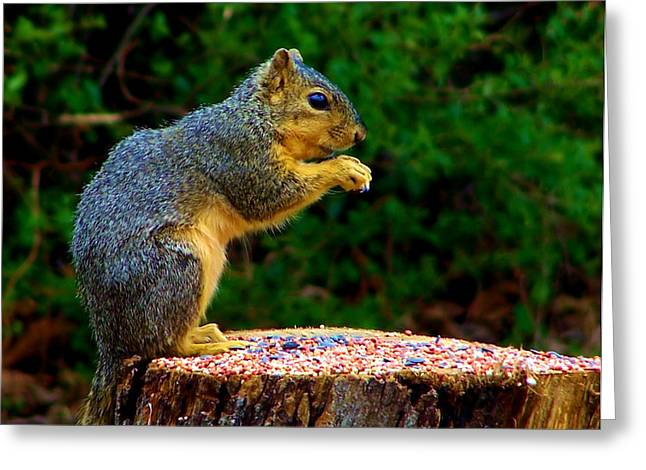 Munchin On Seeds Greeting Card by Karen M Scovill