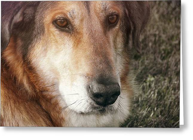 Murphy Greeting Card by JAMART Photography